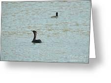 Cormorants On The Lake Greeting Card