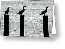 Cormorants Port Jefferson New York Greeting Card