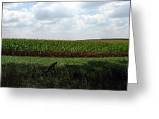 Corn And Clouds Greeting Card