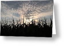 Corn At Sunrise Greeting Card