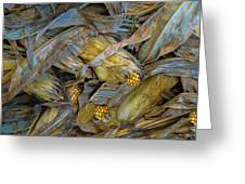 Corn Crops Greeting Card