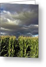 Corn Field Beform Storm Greeting Card