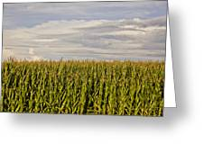Corn Field In Sunset Greeting Card