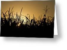 Corn Field Sunrise Greeting Card