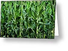 Corn Field's First Row Greeting Card