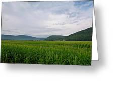 Corn Fields, Upstate New York Greeting Card