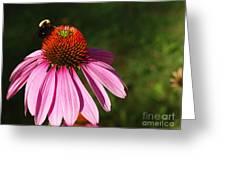 Corn Flower Greeting Card