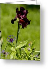 Corn Flower With A Friend Visiting Greeting Card