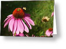 Corn Flower With Bee Greeting Card