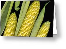 Corn On The Cob I  Greeting Card