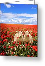 Corn Poppies And Twin Lambs Greeting Card