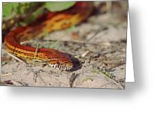 Corn Snake 2 Greeting Card