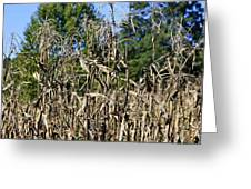Corn Stalks Drying Greeting Card
