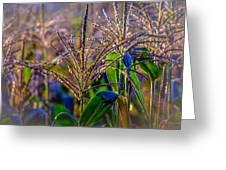 Corn Tassels Greeting Card