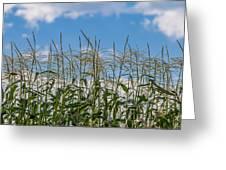 Corn Tassels In The Sky Greeting Card