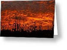 Corn Under A Fiery Sky Greeting Card