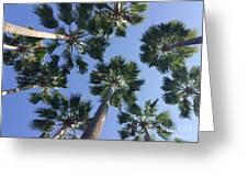 Corner Palms Greeting Card