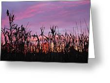 Cornfield Sunset Greeting Card