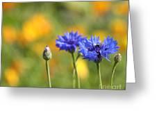 Cornflowers -1- Greeting Card by Issabild -