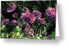 Cornflowers Autumngraphy - Photopainting Light Greeting Card