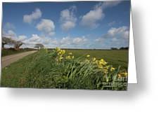 Cornish Daffodil Hedge Greeting Card