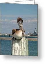 Corpus Christi Pelican Greeting Card