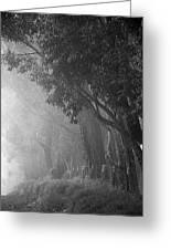 Corridor Of Mist Greeting Card