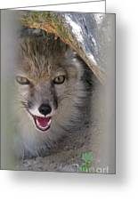 Corsac Fox- Vulpes Corsac 01 Greeting Card