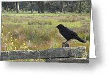 Corvus Greeting Card