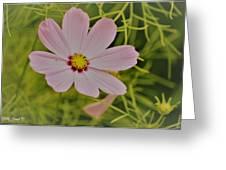 Cosmic Aura Greeting Card