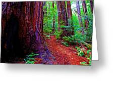 Cosmic Redwood Trail On Mt Tamalpais Greeting Card