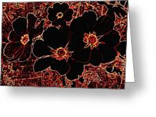 Cosmos Caliente Greeting Card