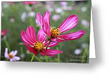 Cosmos In Tokyo Greeting Card