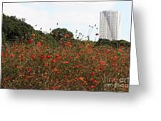 Cosmos In Tokyo Garden Greeting Card