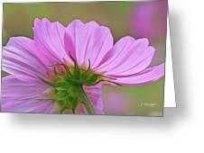 Cosmos Light Greeting Card