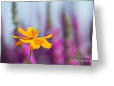 Cosmos Polidor Flower Greeting Card