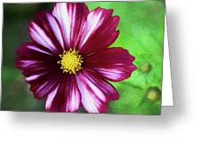 Cosmos Velouette Greeting Card