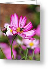Cosmos Welcoming Greeting Card