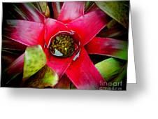Costa Rica Flower Greeting Card