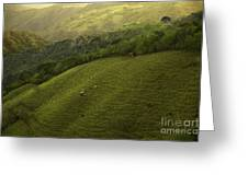 Costa Rica Pasture Greeting Card