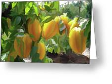 Costa Rica Star Fruit Known As Carambola Greeting Card