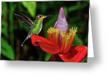 Costa Rican Hummingbird Greeting Card