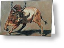 Costa Rican Red Bull Greeting Card
