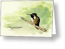 Costa's Hummingbird  Greeting Card