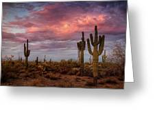 Cotton Candy Pink Sonoran Sunrise  Greeting Card