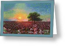 Cotton Field Sunset Greeting Card