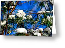 Cotton Pickin Snow Greeting Card
