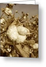 Cotton Sepia Greeting Card