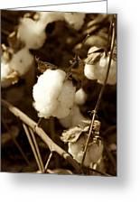 Cotton Sepia2 Greeting Card