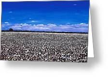 Cottonfields In Eastern Arkansas Greeting Card